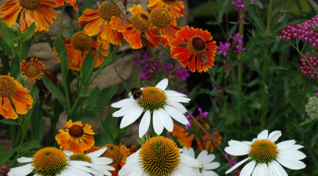 Different colour flowers with a bee