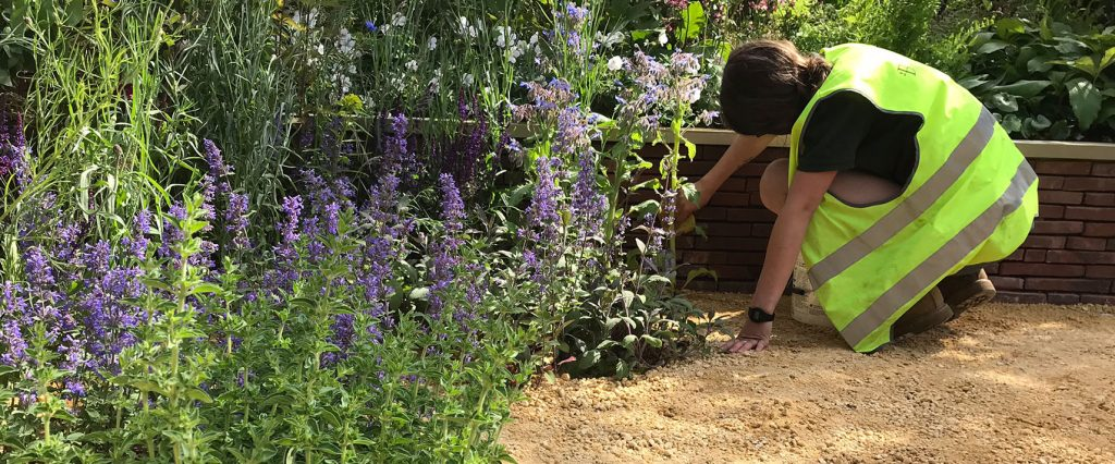 RHS Chatsworth Show Garden Diaries: The Build. Butterworth Horticulture planting team