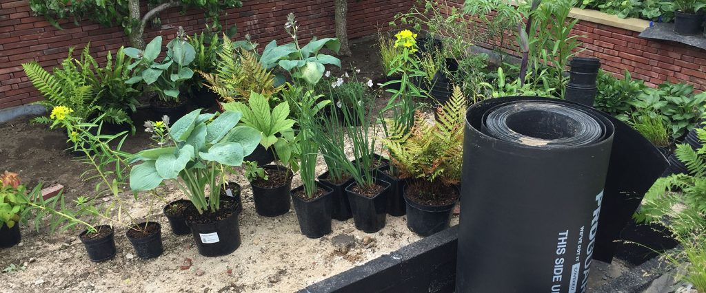 Plants being prepared to go into the WEdgwood Garden at RHS Chatsworth Flower Show