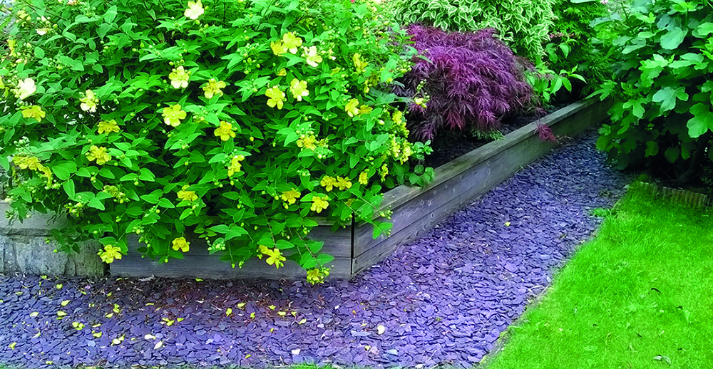 A plum slate border next to grass with a yellow and green bush.