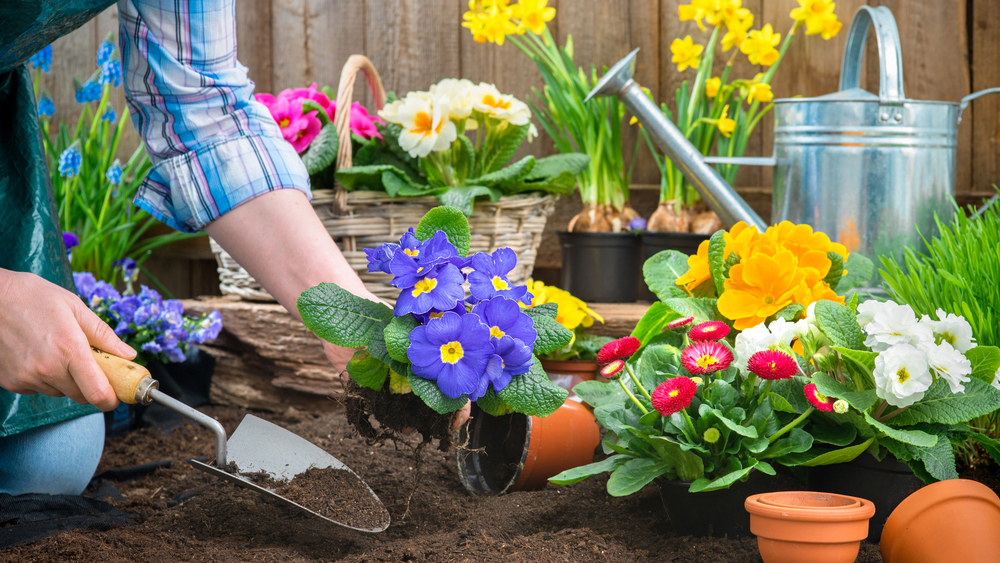 Benefits of Gardening for Mental Health