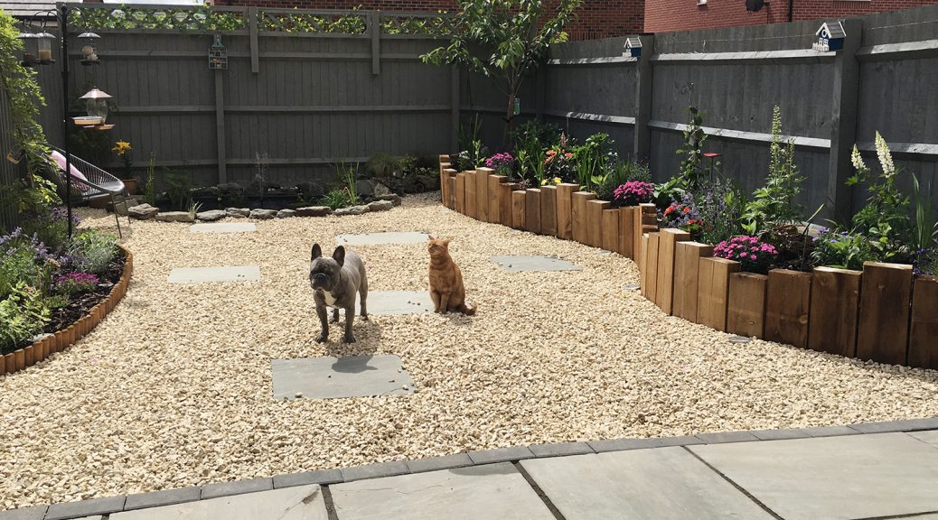 Garden featuring Cotswold Gravel with a dog and cat sitting in it. Wooden borders filled with pink flowers surround.