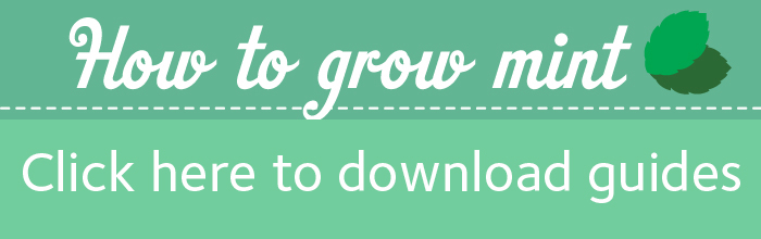 Green box with a caption saying How to grow your own mint, click to download a pdf guide.