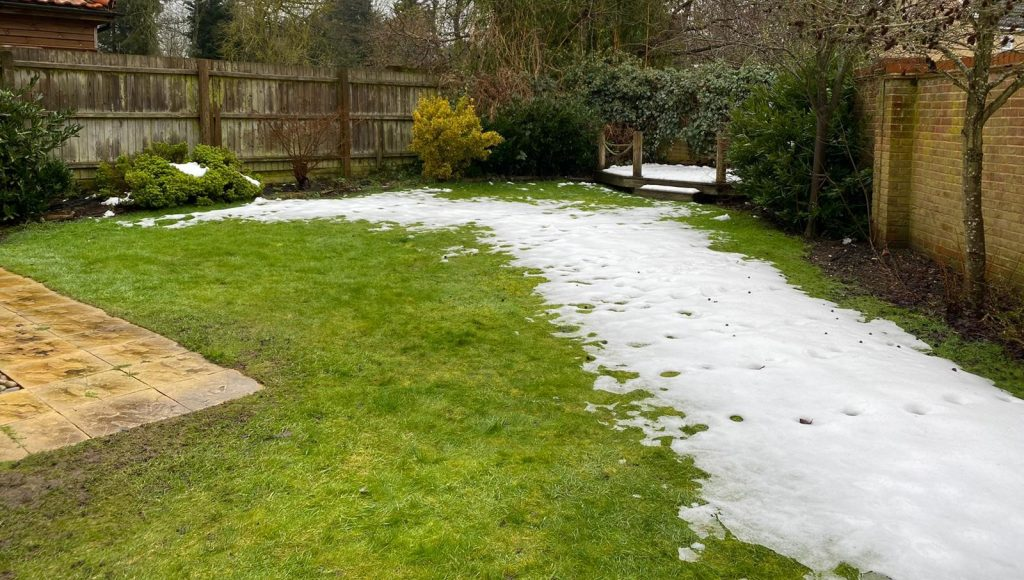 Lawn before the garden transformation started.
