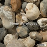 Oyster Pebbles 40mm